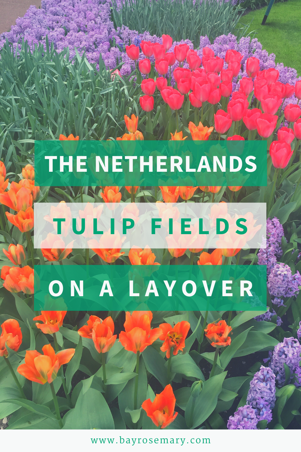 Visit Keukenhof on a layover